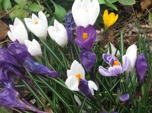 Spring 2014 2014-03-02 003